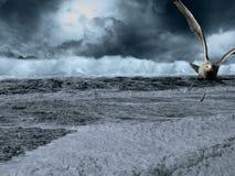 Tempête de évasion de mouette au-dessus de mer photos stock