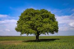 Tempête de attente de te d'arbre isolé photo libre de droits
