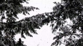Tempête de chute de neige importante tombant sur des branches d'arbre forestier clips vidéos