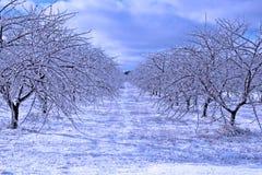 Tempête de glace Photos stock