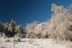 tempête de glace Photo libre de droits