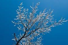 Tempête de glace de l'hiver Photographie stock