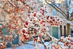 Tempête de l'hiver Photo stock