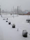 Tempête de neige Photo stock