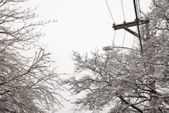 Tempête de neige, câbles électriques et arbres Image libre de droits