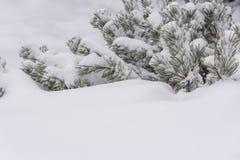 Tempête de neige d'hiver à Toronto en février image libre de droits