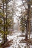 Tempête de neige dans les montagnes Images libres de droits
