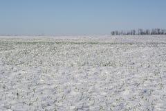 Tempête de neige de l'hiver Photo stock