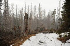 Tempête de neige de neige dans la forêt Photo libre de droits