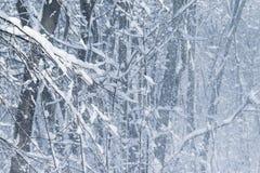 Tempête de neige de l'hiver dans la forêt Images libres de droits