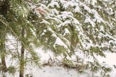 Tempête de neige de ressort en parc de Chautauqua image stock