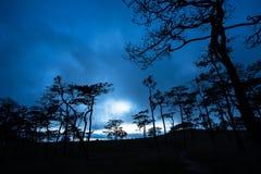 Tempête de pluie au champ de pin en Phu Soi Dao National Park Image stock