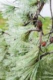 Tempête de pluie verglaçante Photographie stock libre de droits