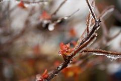Tempête de pluie verglaçante dans le bord du ressort Photographie stock libre de droits