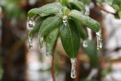 Tempête de pluie verglaçante dans le bord du ressort Images libres de droits