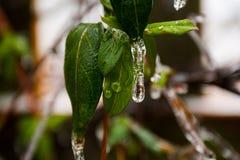 Tempête de pluie verglaçante dans le bord du ressort Image libre de droits