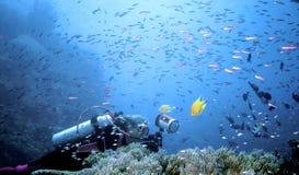 Tempête de poissons de Beqa Photographie stock libre de droits