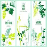 Tempalte με τα φύλλα και τις σκιαγραφίες φυτών Στοκ Εικόνα