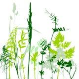 Tempalte με τα φύλλα και τις σκιαγραφίες φυτών Στοκ φωτογραφία με δικαίωμα ελεύθερης χρήσης