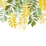 Tempalte avec des silhouettes de feuilles Images stock