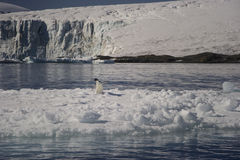 Tempanos en losu angeles półwysep Antartica Obraz Royalty Free