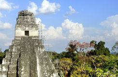 Tempel 1 van Tikal Stock Afbeelding