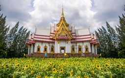 Tempel auf Feld der Sonnenblume Stockbild