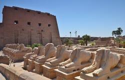 Tempel av amonen på Karnak Luxor egypt Arkivbild