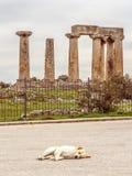 Tempel av Apollo i forntida Corinth Grekland Arkivfoton
