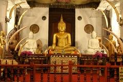 Tempel av sakral tandrelik 2, Sri Lanka Fotografering för Bildbyråer