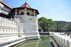 Tempel av tanden royaltyfri fotografi