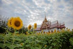 Tempel, dak, zon, mooie vogels, land, gele bloemen, Royalty-vrije Stock Afbeelding