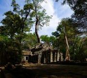 Tempel door boom wordt behandeld die stock fotografie