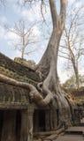 Tempel in Dschungel gewachsenen Bäumen Stockfotografie