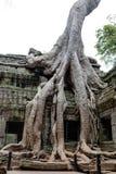 Tempel för en khmer för Ta Prohm forntida, Angkor Wat Cambodia Fotografering för Bildbyråer