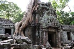 Tempel för Ta Prohm royaltyfri fotografi