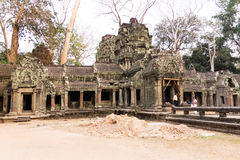Tempel för Ta Prohm Royaltyfri Bild