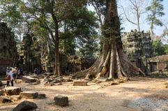 Tempel för Ta Prohm Arkivfoton