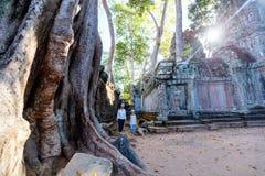 Tempel för Ta Prohm Fotografering för Bildbyråer
