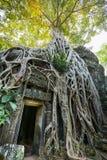 Tempel för Ta Prohm, Cambodja Fotografering för Bildbyråer