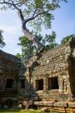 Tempel för Ta Prohm, Cambodja Royaltyfria Bilder