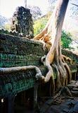 Tempel för Ta Prohm den stora trädräkningen templet som lokaliseras i den Siem Reap staden Cambodja arkivfoton