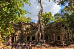 Tempel för Ta Prohm, forntida arkitektur i Cambodja Royaltyfri Foto