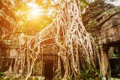 Tempel för Ta Prohm i Angkor, Siem Reap, Cambodja Royaltyfri Foto