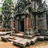 Tempel för Ta Prohm med det jätte- banyanträdet på solnedgången Angkor Wat, Cambodja Royaltyfri Bild