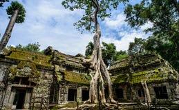Tempel för Ta Prohm med trädet som växer ut ur det, Siem Royaltyfri Foto