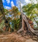 Tempel för Ta Prohm på det Angkor Wat komplexet, Siem Reap, Cambodja Royaltyfri Fotografi