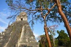 Tempel I av den arkeologiska platsen av Tikal i El Peten, Guatemala Royaltyfri Bild
