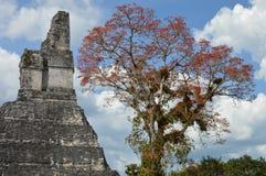 Tempel I av den arkeologiska platsen av Tikal i Guatemala Arkivbild