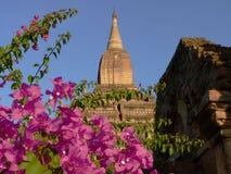 Tempel i Bagan Myanmar Arkivbild